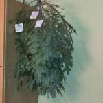 our sapling
